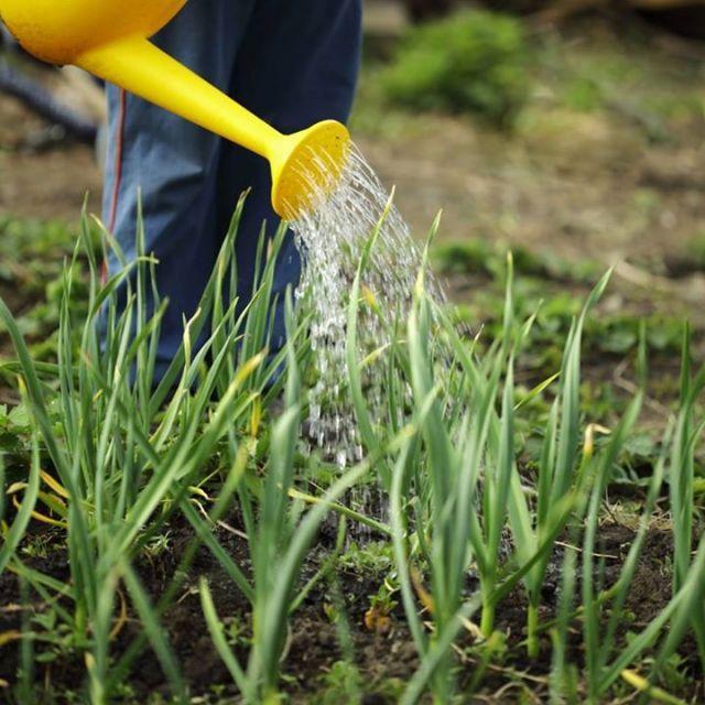 Обслуживание и уход за садом
